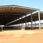 Судан, молочна ферма на 1200 корів