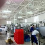 Узбекистан, молокопереробний завод на 10 000 літрів/день