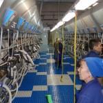 Казахстан, молочна ферма на 1100 корів