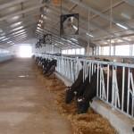 Узбекістан, молочна ферма на 110 корів